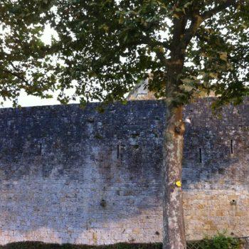 l'arbre 3057