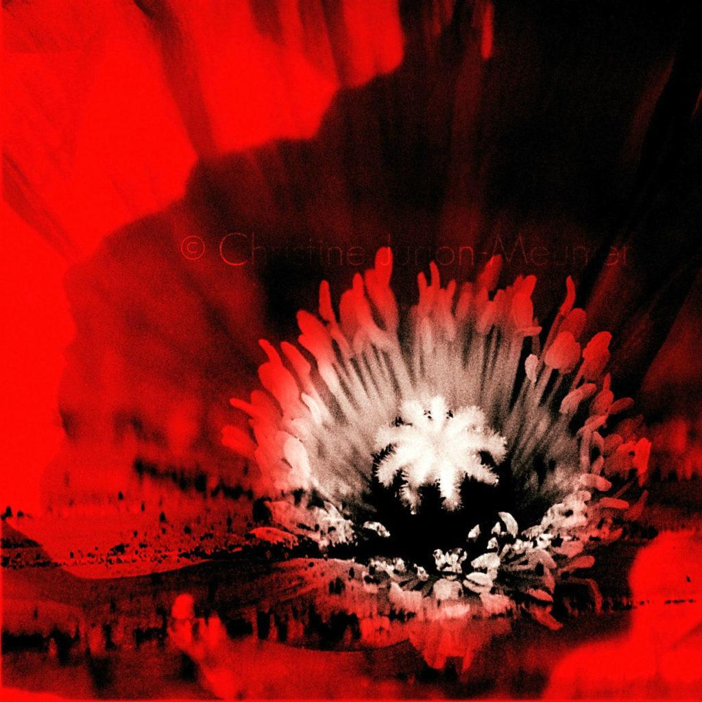 hallucination rouge pavot ©
