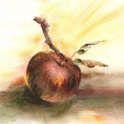 Aquarelle – Pomme et branche